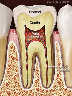 A Step By Step Guide To Root Canal Treatment Gorbatov
